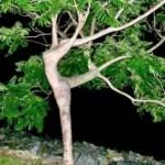 Arborsculpture 5