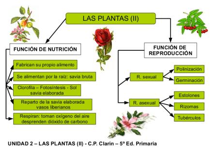 Funciones Vitales En Las Plantas Www Plantasyjardines Es