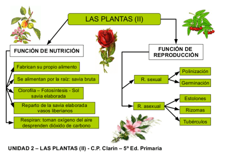 Funciones vitales en las plantas