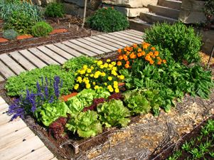 Cómo cultivar hortalizas en invierno