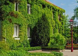 Pros y contras de las paredes verdes