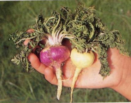 Plantas para darte vitalidad