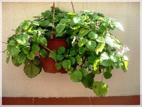 Sacar las plantas al exterior