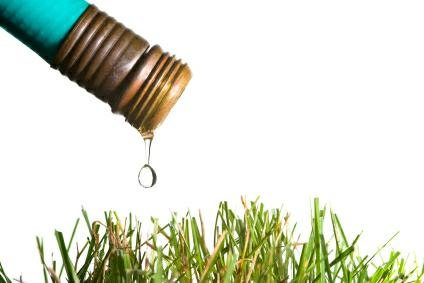 Ahorrar agua en las plantas