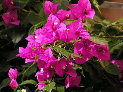 Plantas con floración larga