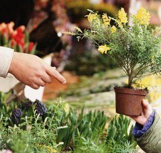 Consejos para adquirir plantas