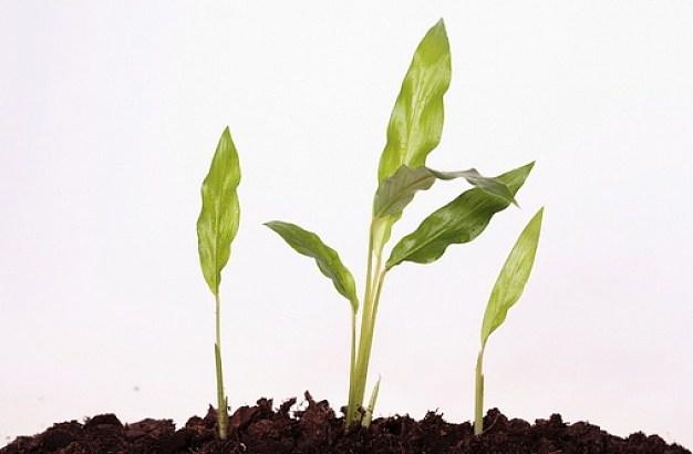 Plantas que no crecen