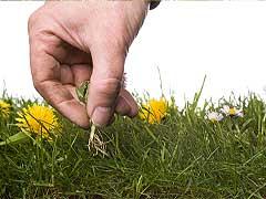 Reconoce tu jardín saludable!