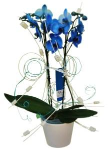 ¿Te gustan las flores azules? 1
