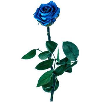 rosa-azul-preservada