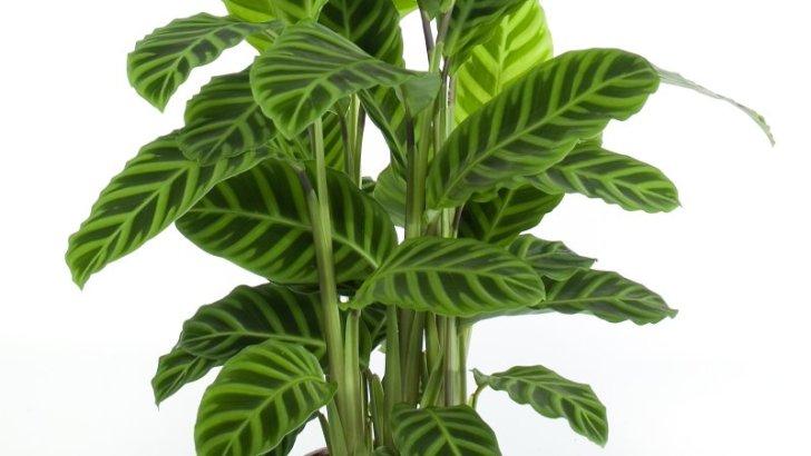Tus plantas pueden crecer más rápido