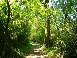 Lo que no sabes de los bosques