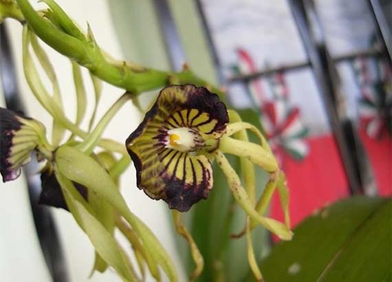 Plantas que mejoran el ambiente del hogar