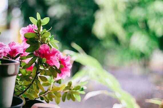 Convierte tu terraza en un jardín