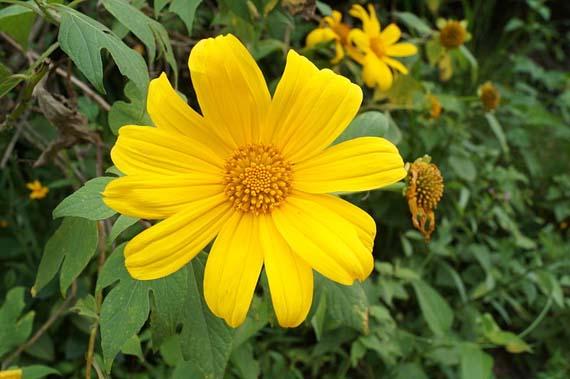 Flores y plantas de tonalidad amarilla para decorar el hogar