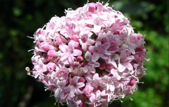 Plantas medicinales para un mejor sueño en verano