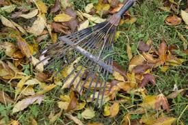 Cuidados de nuestro jardín en octubre