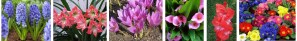 Bulbos de Primavera - Bulbos de Otoño 2