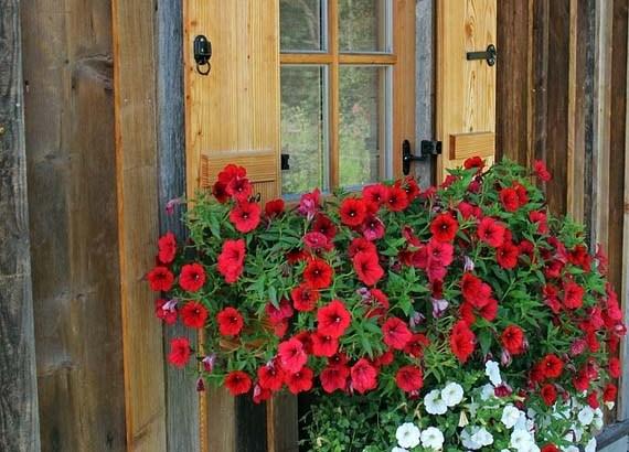 Consejos para cuidar las plantas en la terraza