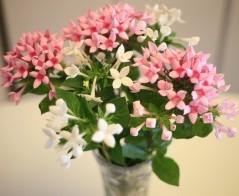 Plantas y flores del mes de diciembre 4
