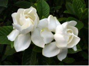 Plantas y flores del mes de diciembre 2