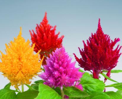 Plantas y flores del mes de diciembre
