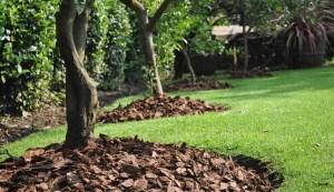 Cuidados de nuestro jardín en febrero 1
