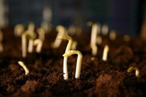 Febrero: Preparando semilleros para nuestro huerto 3