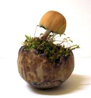 Hongo planta acento