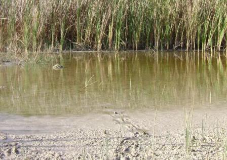 Tipos de suelo para plantas for Suelos de hormigon para jardin