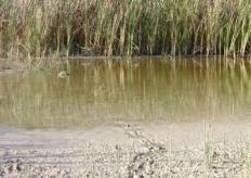 Suelos pantanosos