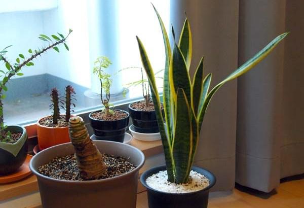 ¿Por qué deberíamos tener plantas en nuestro hogar?