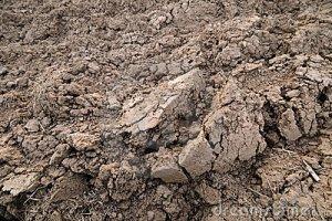 Tipos de suelo para plantas 5