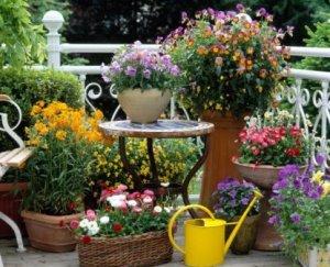 Plantar en balcones 2