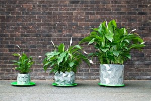 Growth, el macetero que crece a la vez que nuestras plantas 3