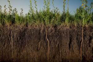 Agricultura Regenerativa II 1