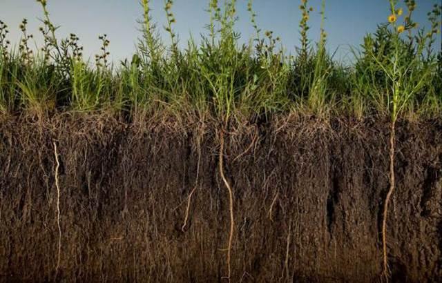 Agricultura Regenerativa II