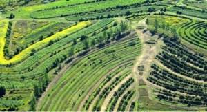 Agricultura Regenerativa II 4