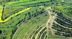 Agricultura regenerativa3