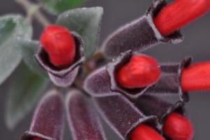 La planta lápiz de labios 4