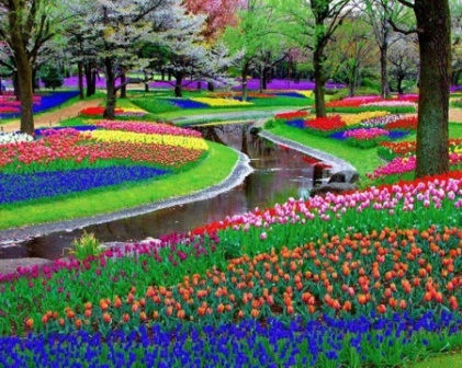 Los jardines de Keukenhof (Holanda)