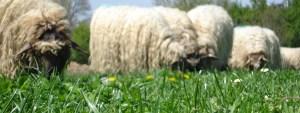 Agricultura Regenerativa II 3