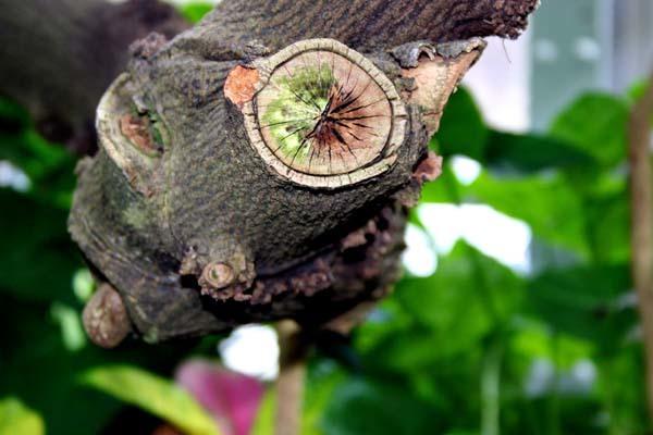 Cómo podar las ramas de un árbol