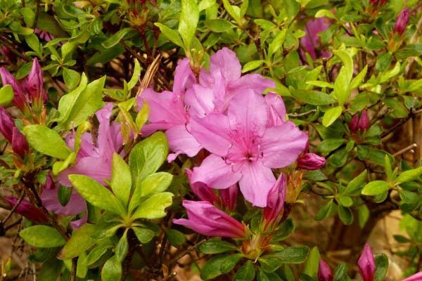 Consejos para cuidar de nuestras plantas en el jardín