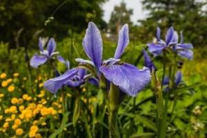 proteger-flores-y-plantas-en-invierno