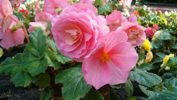 Plantas ideales para la primavera