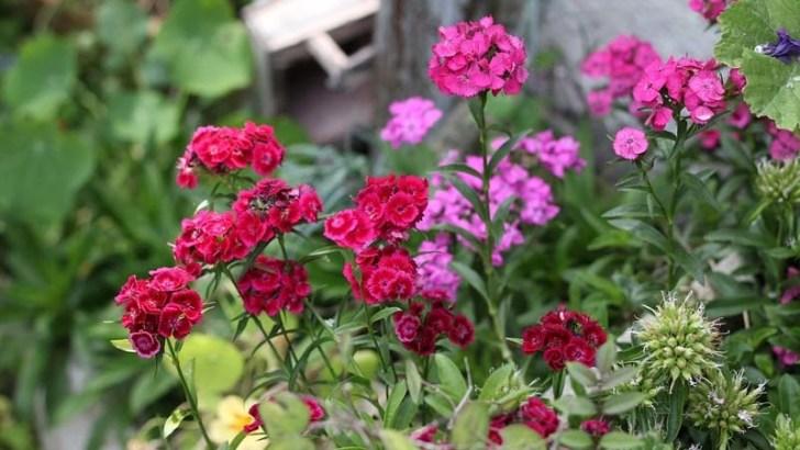 consejos para plantas de de exterior