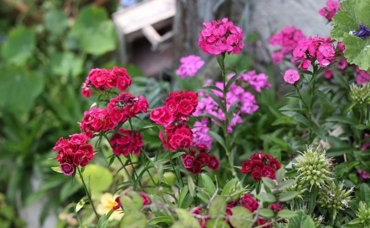 plantas de de exterior