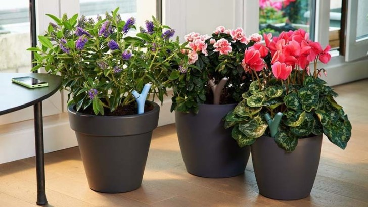 ¿Qué debemos tener en cuenta al comprar plantas?