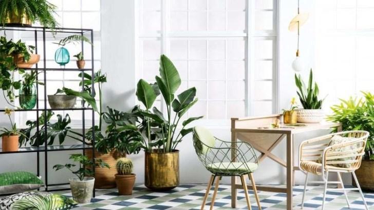 Consejos para cuidar las plantas de interior